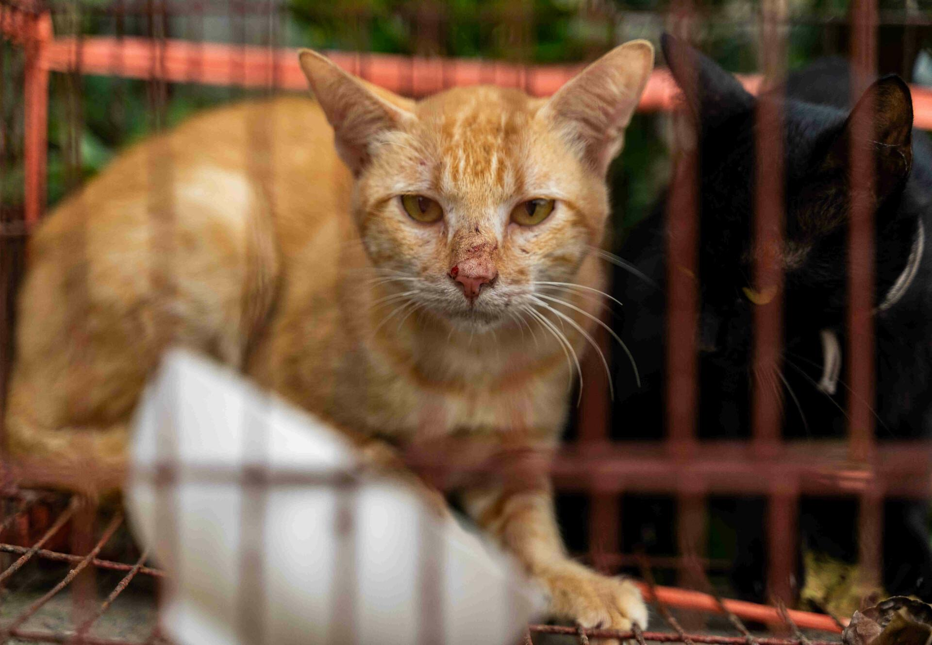 Pitiful cats in cages