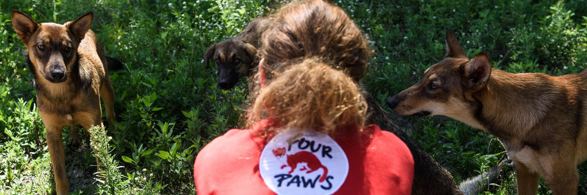 FOUR PAWS team on-side