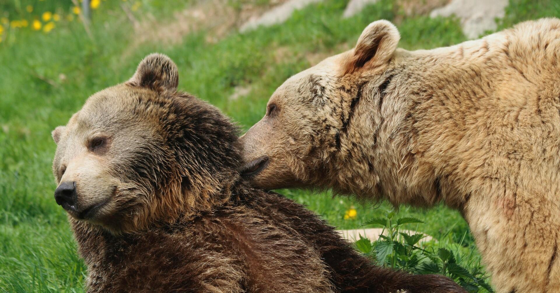 Die Bären vergnügen sich gemeinsam
