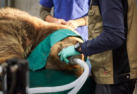 Zahn-Operation Napa