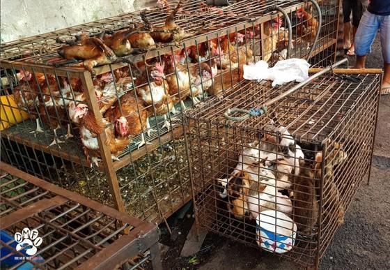 Hundefleischmarkt Indonesien