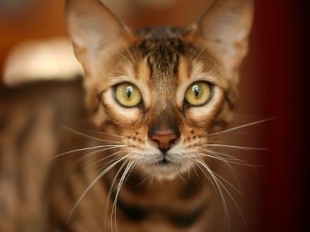 infos sur les chats