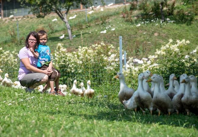 Meistens sind die Enten in kleinen Gruppen auf der Wiese unterwegs