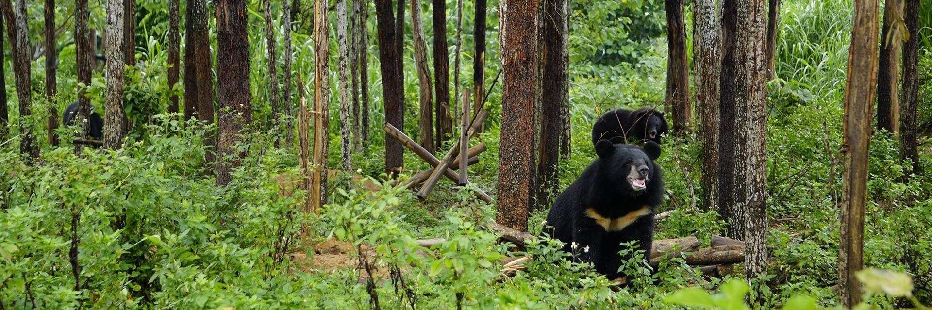 Bears in Ninh Binh