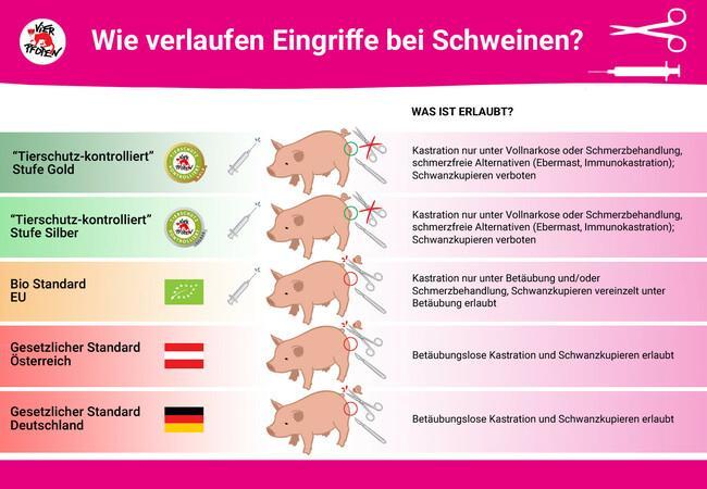 """Eingriffe bei Schweinen - """"Tierschutz-kontrolliert"""""""
