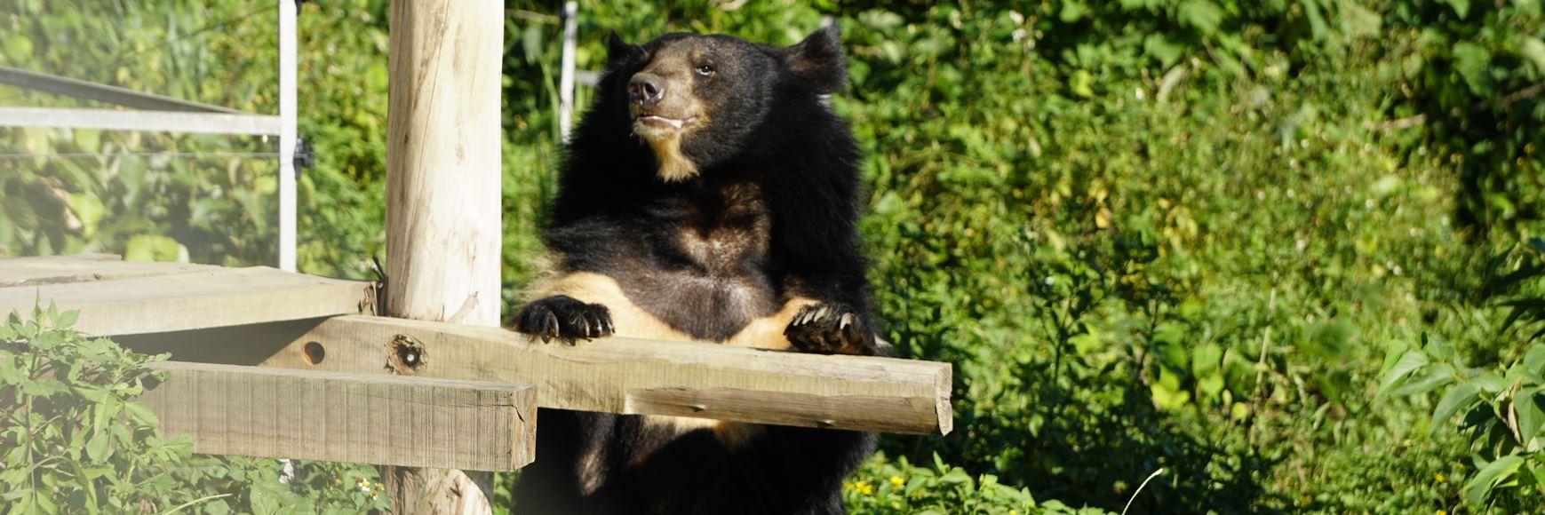 Happy rescued bear