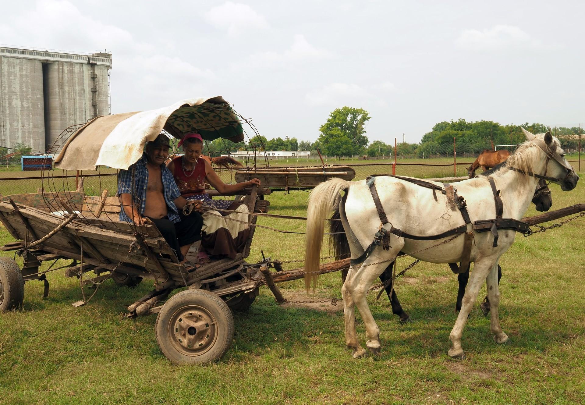 Arbeitspferde (c) VIER PFOTEN | ARCA | Kuki Barbuceanu
