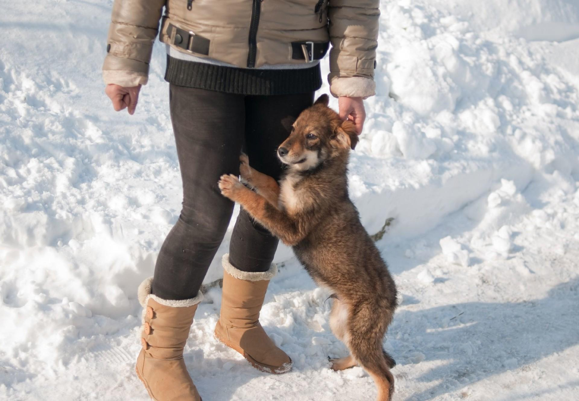 Tierheim Speranta in Rumänien
