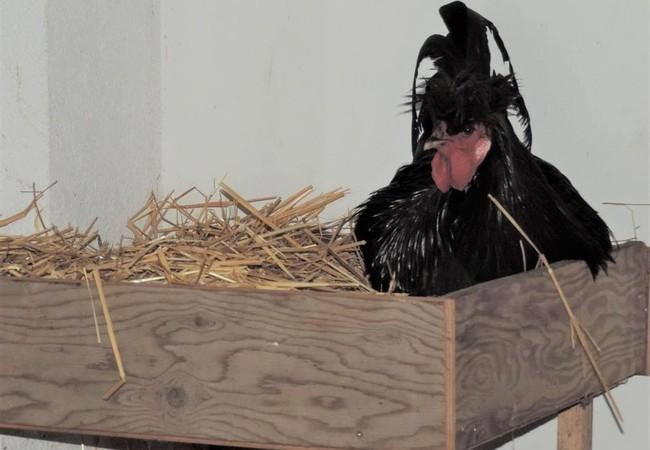 Zu Weihnachten hat Eberhard ein selbstgebautes Nest an seinem Lieblingsort bekommen: Dem Bürofenster!