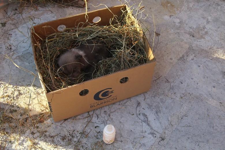 In diesem Karton wurde das Bärenjunge gefunden (c) VIER PFOTEN | Hazir Reka
