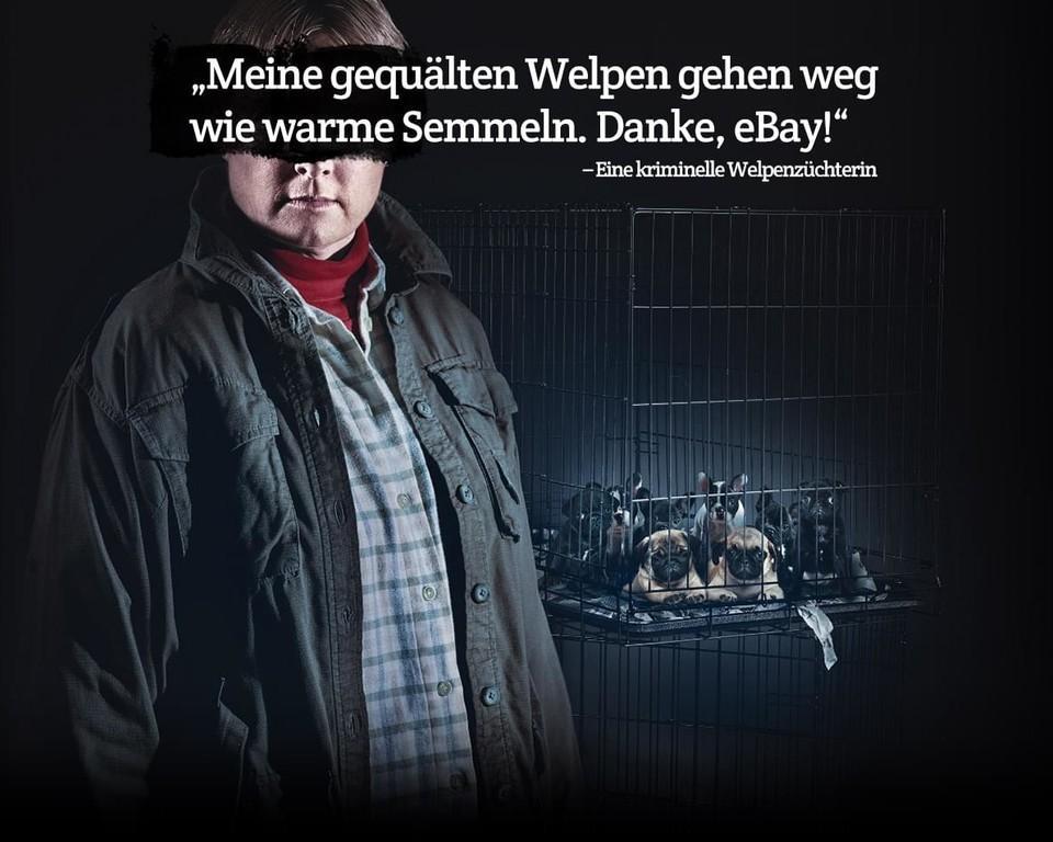 eBay campagne