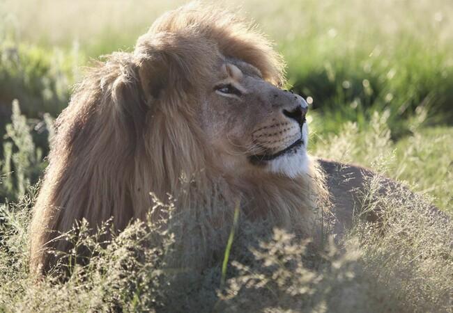 Lions Mario at LIONSROCK
