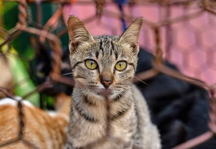 Schliessung eines Katzen-Schlachthauses in Vietnam